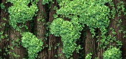 Plants: the best solution against climate change