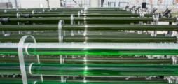 Developing microalgae into a commercial activity for bulk products