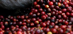 2 GreenTEC Awards nominations for coffee recycling start-up PectCof