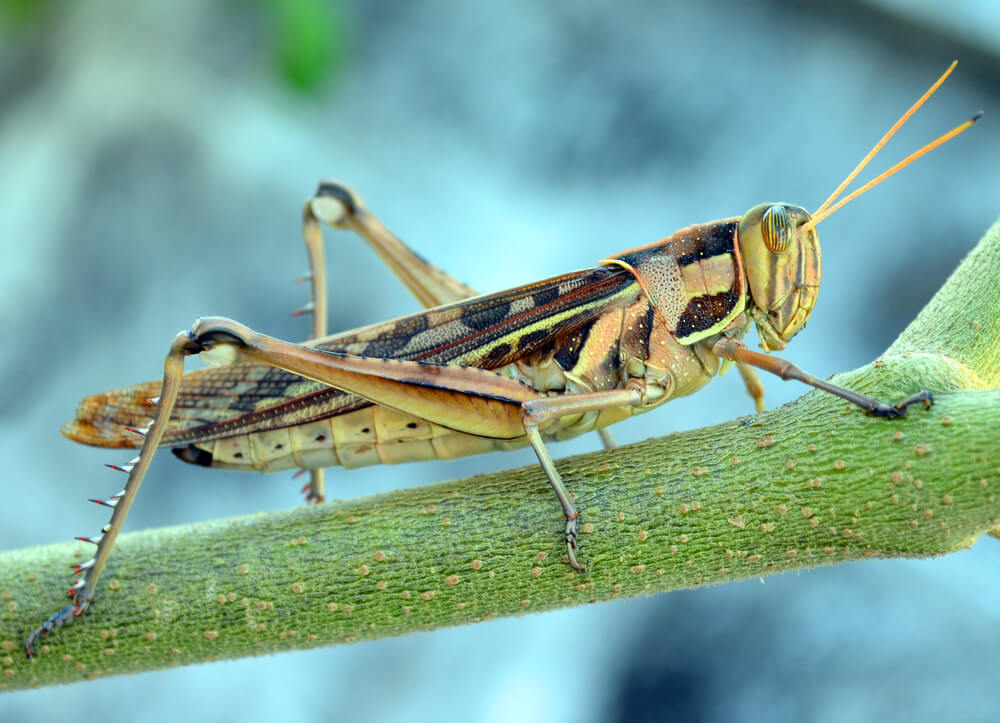 Crickeat, Polish protein snacks made from crickets!