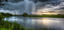 T-Rain