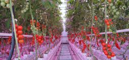 Climate-KICs Project Carbon-LED realises a highly efficient LED based cultivation system