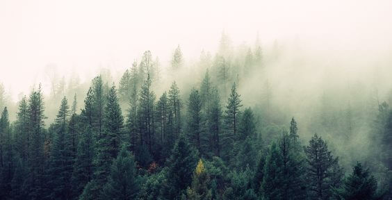 forestry circular economy